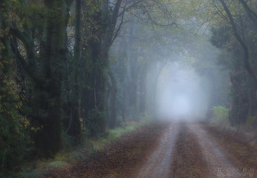 autumn fall fog rural foggy mo d200 kennett matthoward nikon80200 tunnelroad bootheel coveredroad kennettmissouri matthewhoward kennettmo mshhoward