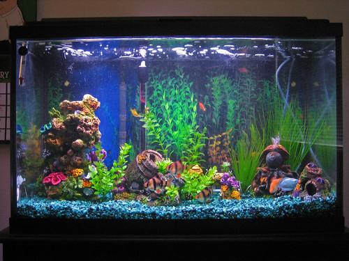 Fish tank 29 gallon jake s 29 gallon planted tank for Dustins fish tanks