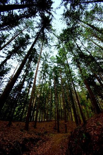wood trees sky relax geotagged austria high holidays badwaltersdorf spa steiermark styria therm therme geo:lat=47160715 geo:lon=16042271