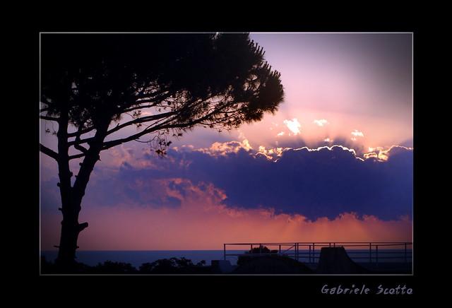 Pino marittimo al tramonto