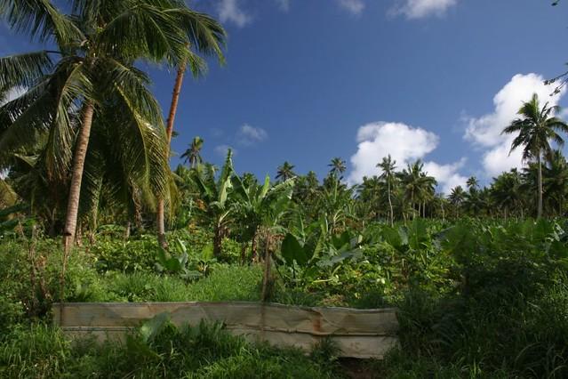 Green + blue. Vava'u Island, Tonga.