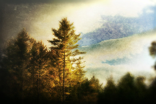 trees fall texture forest sunrise painting landscape october antique townsend