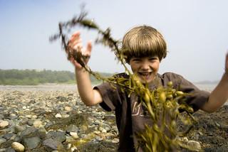 Seaweed Attack!!