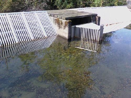 Salmon Hatchery pond