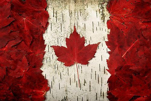 """Схема вышивки  """"Флаг канады """" ."""