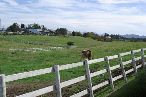 2008年 秋 岡山県 蒜山高原6