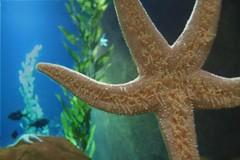 animal, organism, marine biology, invertebrate, marine invertebrates, fauna, starfish,