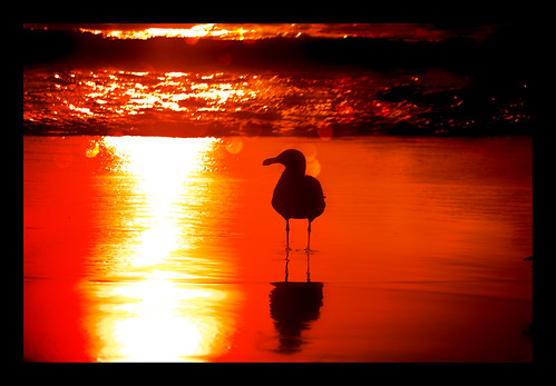sunset wallpaper bird geotagged waves seagull hermosabeach yobs hbw slightbokeh butsugiri ©davidjstern
