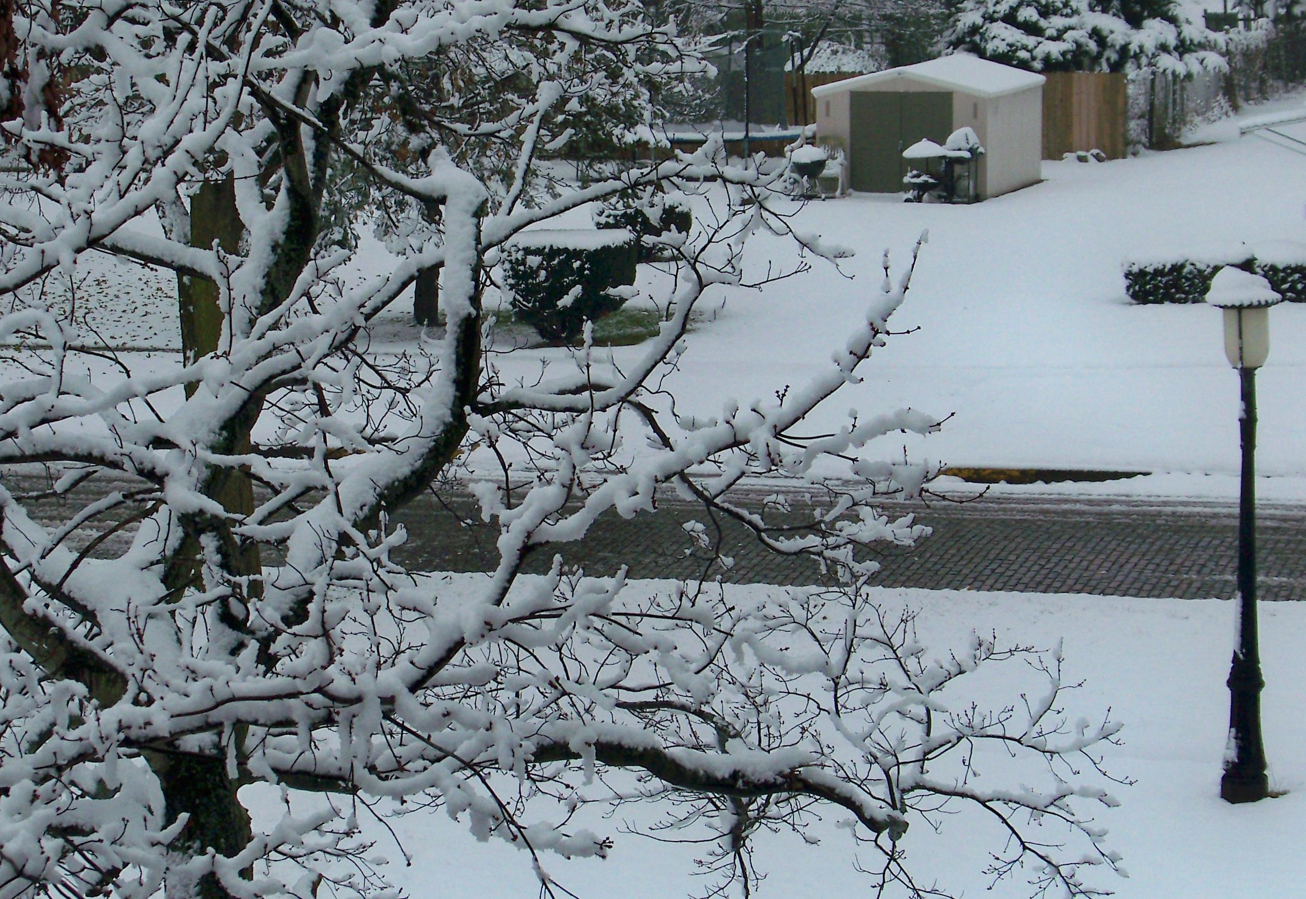 Illinois vermilion county muncie - November Usa Castle Illinois United Snowstorm Homer States Staaten Tatsunis Vereinigten Raycunningham Raymondcunningham Zaruka Raymondkcunninghamjr