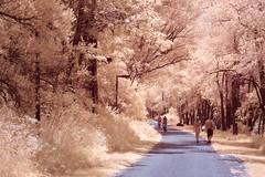 La voie/The Way/La via