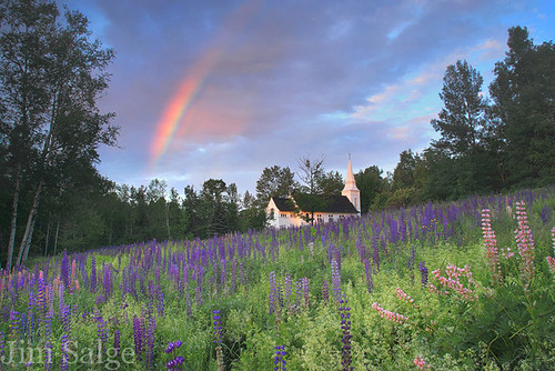Magic Happens - Rainbow Over Lupines in Sugar Hill, NH