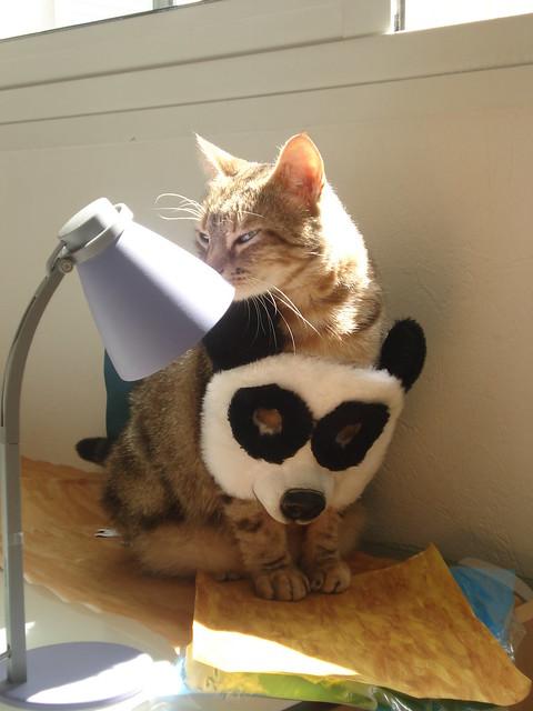 chat vertou