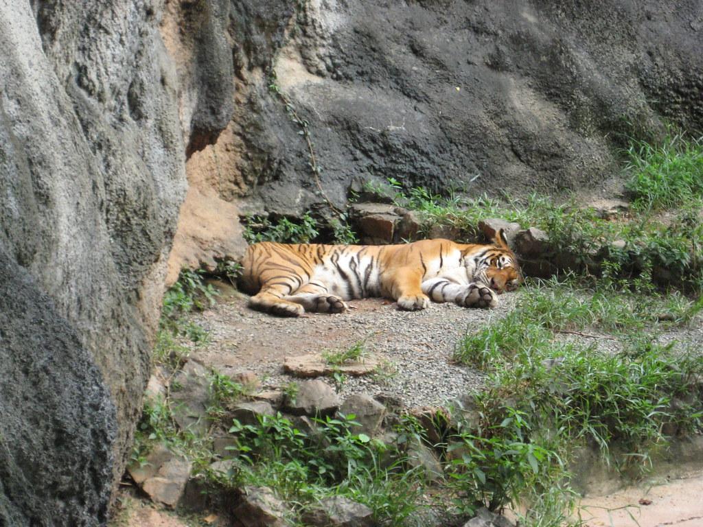Mayaguez Zoo