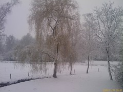 fog(0.0), mist(0.0), branch(1.0), winter(1.0), tree(1.0), snow(1.0), rain and snow mixed(1.0), frost(1.0), winter storm(1.0), blizzard(1.0), freezing(1.0),