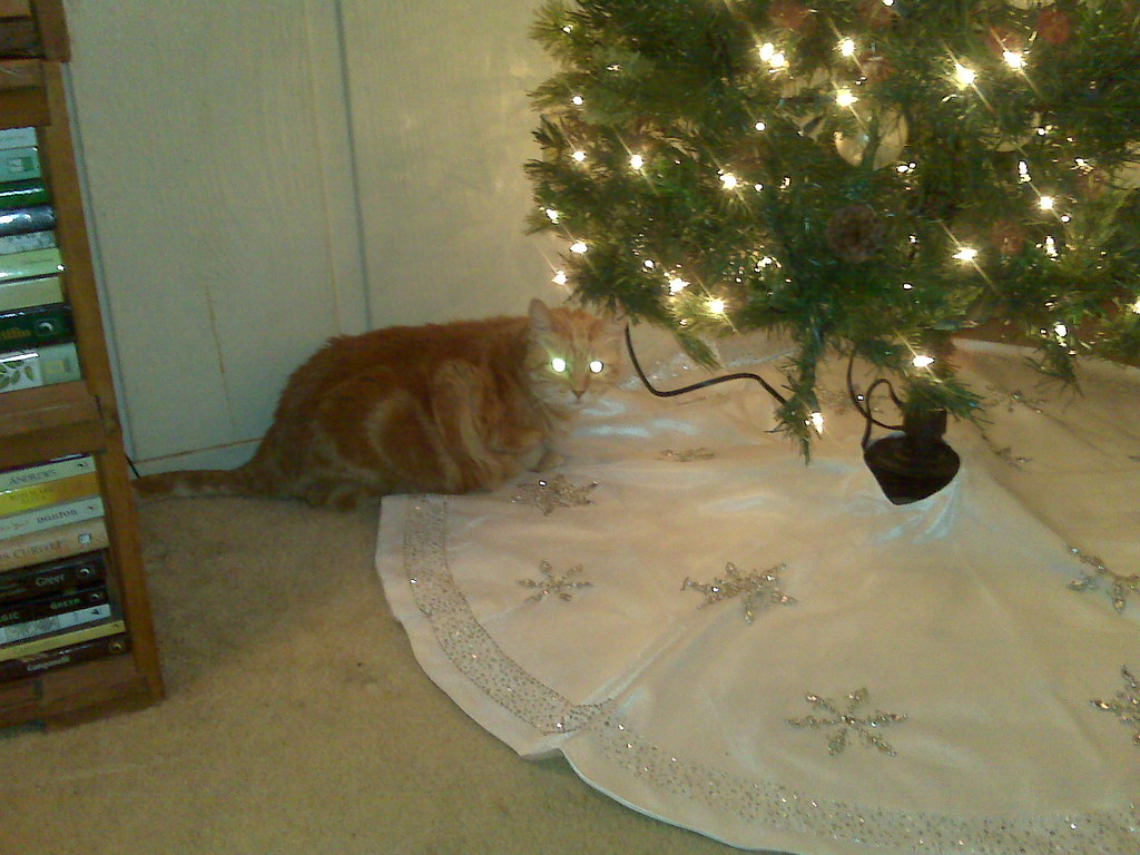 Nardo under the tree