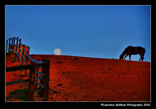 Horse on a Hill at Moonrise