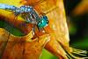 Dragonfly by Woolmarket100