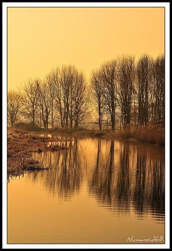 trees winter reflection sunrise dawn canal gloucestershire waterway stroudwatercanal nikond300