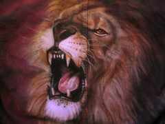 nose, animal, mane, big cats, lion, mammal, roar, whiskers,