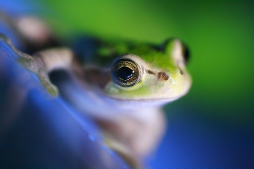 Frog the Model