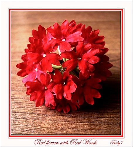 Red flowers with red words....