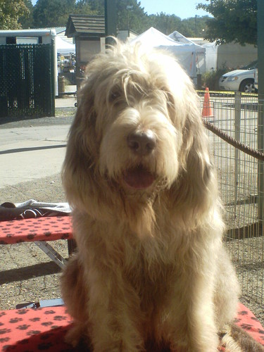 Rare Dog Breeds List With Pictures