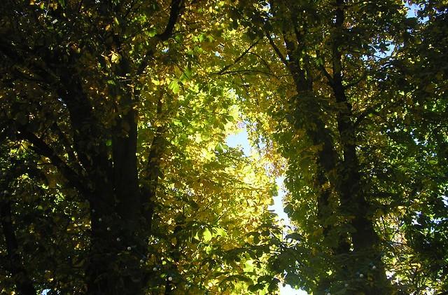 Arboles en otoño