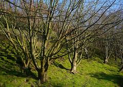 Winter trees on Beacon Hill