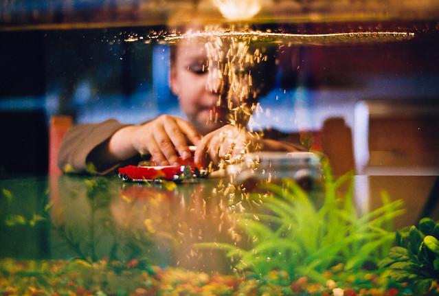 Axel dans l'aquarium