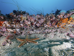 coral reef(1.0), animal(1.0), coral(1.0), sea(1.0), marine biology(1.0), invertebrate(1.0), tide pool(1.0), marine invertebrates(1.0), fauna(1.0), underwater(1.0), reef(1.0), starfish(1.0),