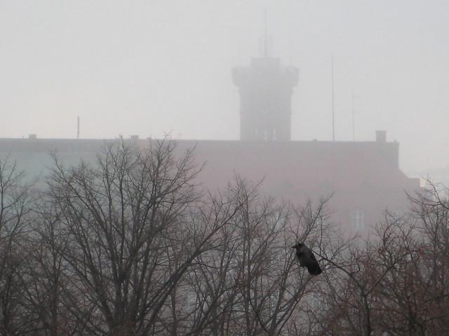 A crow in St. John's park, Helsinki