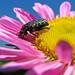 Bugs&spiders&flowers