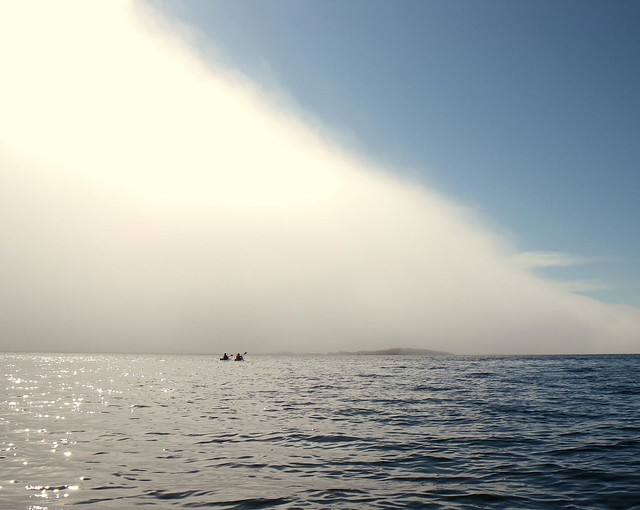 2008-08-10 Chatham Island 431