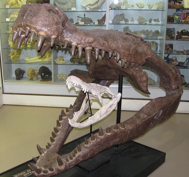 Deinosuchus & Modern Crocodilian