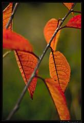 Herbst - fall