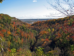 Fall Colours in Spencer Creek Wilderness