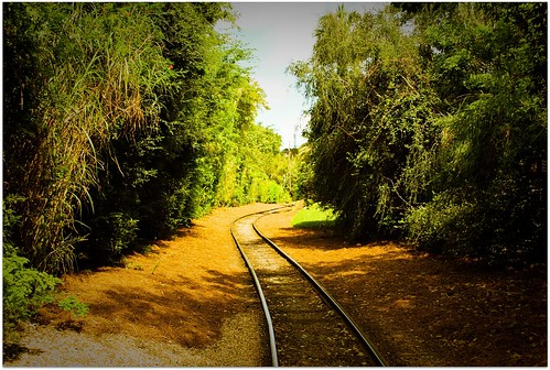 railroad trees nature tampa landscape traintracks davispark nikond60 csxrailroad brandonflorida righttrack photoshoplightroom