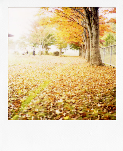 whisper in autumn by mayu♪