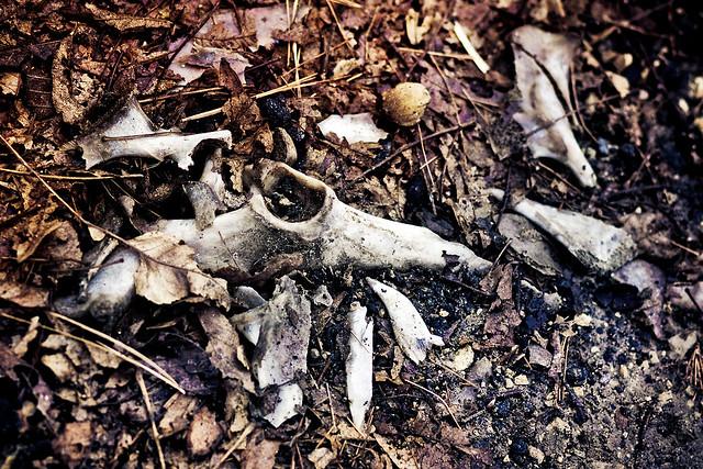 Crushed Skull   Flickr...