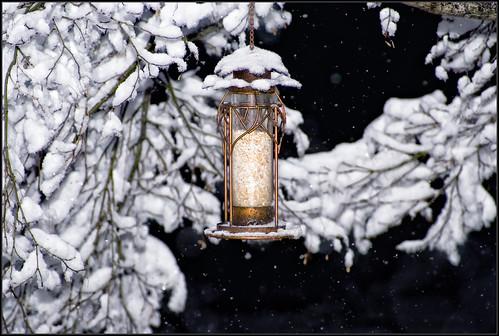 winter snow tree nature night season nikon pennsylvania birdfeeder explore d200 este természet fa montgomerycounty hó tél nikond200 madáretető hóesés merthogyezisvanaházikómellett