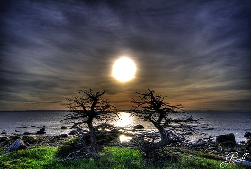 ocean travel trees sunset canada tourism water photoshop newfoundland rocks over atlantic processed witchcraft cbs hrd witchinghour hdraward