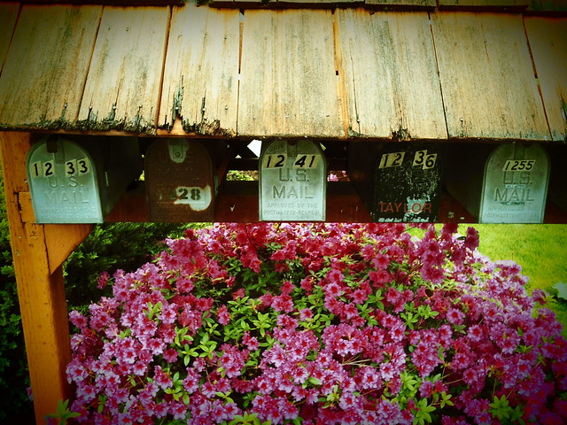 Rust and Flowers