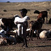 Masai boy and his sheeps