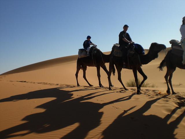 camel trek - tadhg