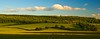 Chiltern fields panorama