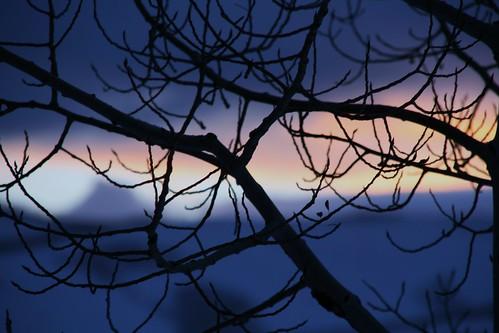 mountains tree sunrise utah bokeh scofield