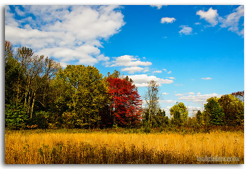 autumn trees fall landscape newjersey places things medford eventstrips