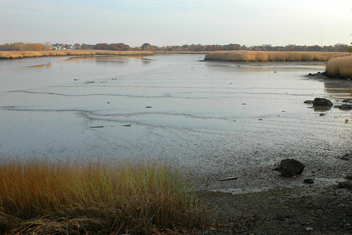 low tide, Neponset River estuary