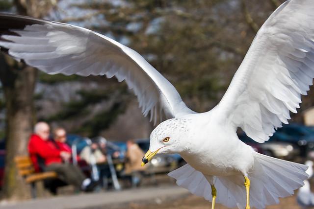 Gull_0232.jpg