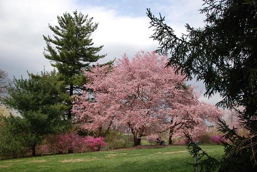 Winterthur Garden in Delaware